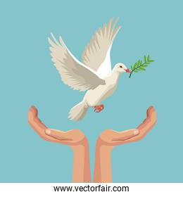 color poster pigeon flying with olive branch in peak and hands holding
