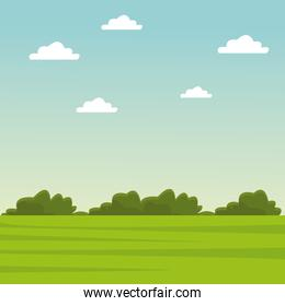 Green grass and sky landscape