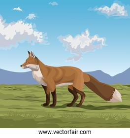 Fox on the nature