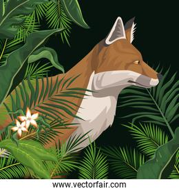 Fox in the jungle over black backgroud