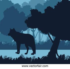 Wolf in the jungle