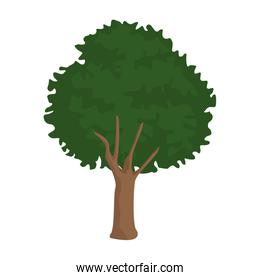 Tree nature isolated