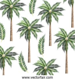 Tree palms background