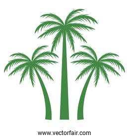Tree palms nature