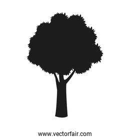 silhouette tree trunk stem branching image