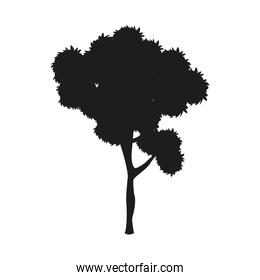 silhouette tree plant natural design image
