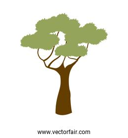 green tree african natural forest flora
