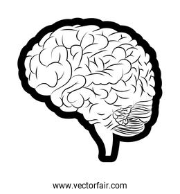 brain mind idea creativity image outline