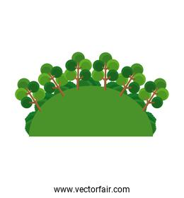 greenery tree forest landscape natural