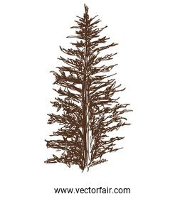 coniferous tree silhouette sketched line art isolated vector