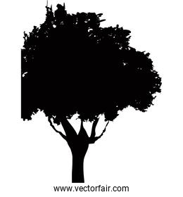 silhouette tree plant foliage branch trunk