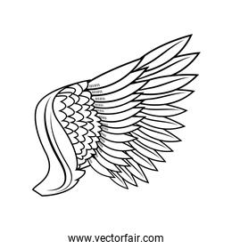 wing feathers bird freedom fly image