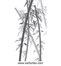 bamboo forest set. spa nature. plant tree with leaves.