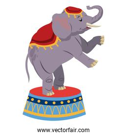 elephant circus entertainment balance icon
