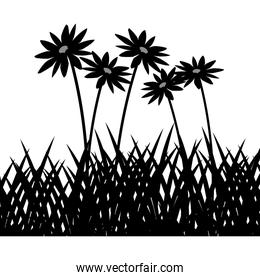 wild herbs and flowers vegetation silhouette