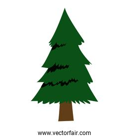 forest pine tree foliage natural trunk icon