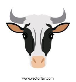 Spotted cow vector illustration set. Cute farm cattle domestic animal collection.