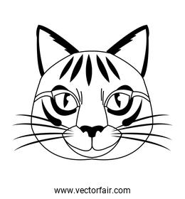 isolated head cat, feline striped character.