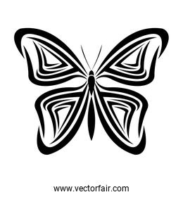 butterfly tribal tatto animal creativity design