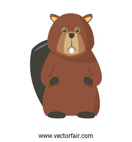 portrait of beaver. cute face of aquatic fluffy rodent vector illustrated