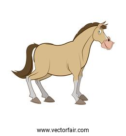 horse domestic animal, farming, agricultural species vector illustration