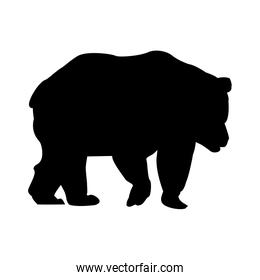 silhouette bear animal forest wild life image