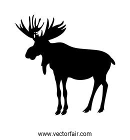 silhouette american elk animal forest wild life image