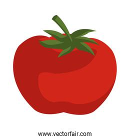 tomato vegetable from the farm organic food