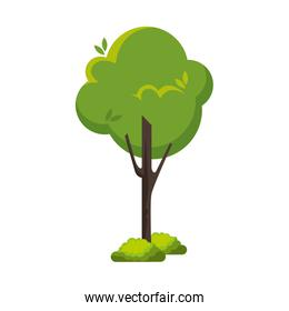 tree natural isolated icon