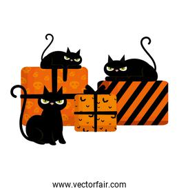halloween black cats with gifts