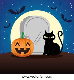 halloween black cat and pumpkin and stone