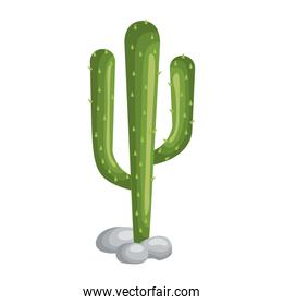 cactus plant isolated icon