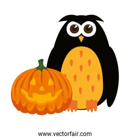 happy halloween pumpkin with owl