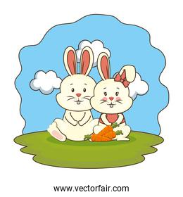 cute rabbits couple with carrot in the camp