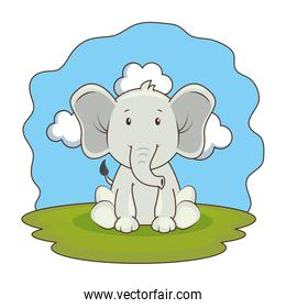 cute elephant in the camp