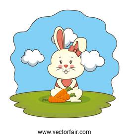 cute rabbit with carrot in the camp