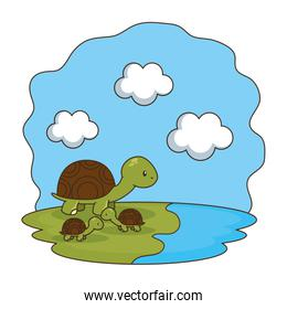 cute turtles family in the camp