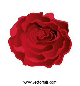 beauty rose isolated icon