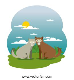 cute grizzly bears couple in the field scene