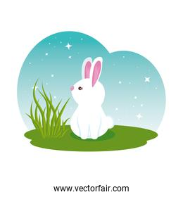 cute rabbit in the field character