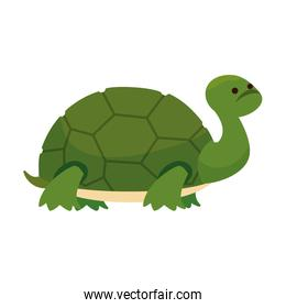 cute turtle wild character
