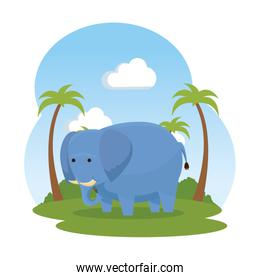 african elephant in the savannah wild character