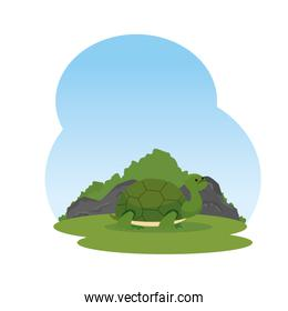 cute turtle wild in the landscape character