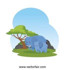 african elephants family in the savannah characters