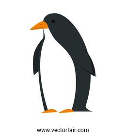 cute penguin bird character