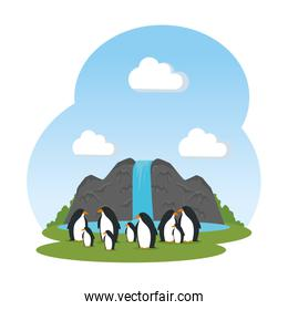 cute penguins birds in the landscape characters