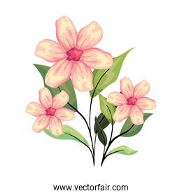beautiful flowers decorative icon