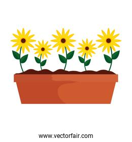sunflowers in pot icon