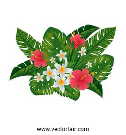 exotic tropical flowers and leafs decoration
