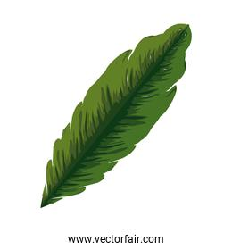 isolated tropical and exotic palm leaf